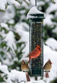 9 best bird feeders in 2020-2021