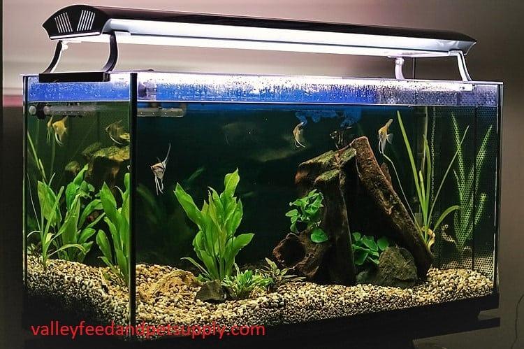 10 Best Beta Fish Tanks Money Can Buy in 2020