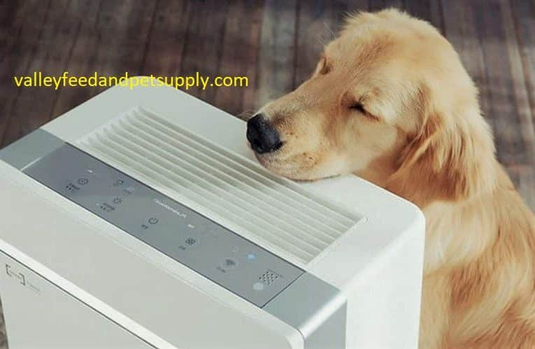 10 Best Air Purifiers For Pets in 2020