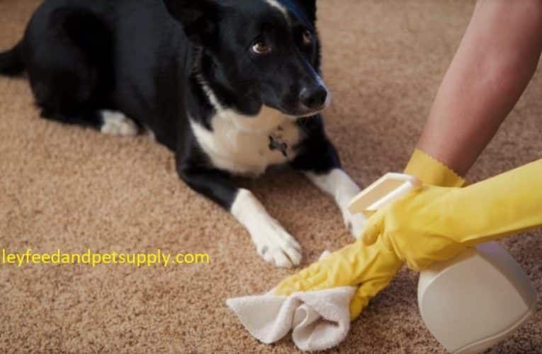 10 Best Carpet Cleaners For Old Pet
