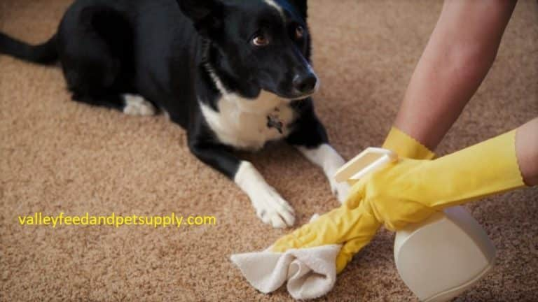 Best Carpet Cleaners For Old Pet