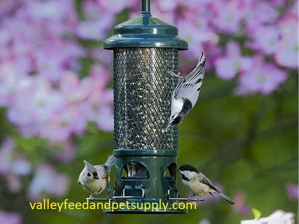 9 Best Bird Feeders in 2020