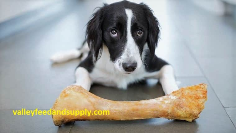 9 Best Bones for Dogs in 2020