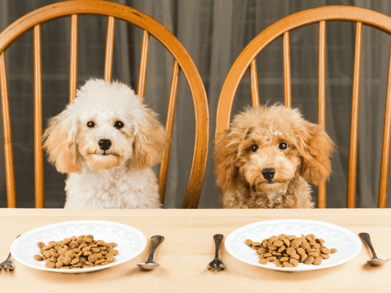 Best Dog Food For Toy Breeds