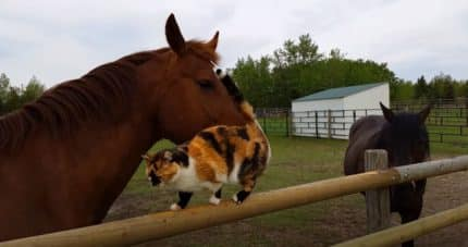 do horses get along with cats